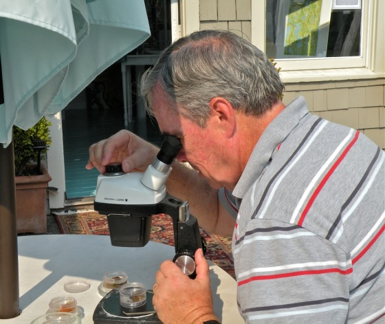 Ralph Haag, retired marine biologist, checks local water samples for life